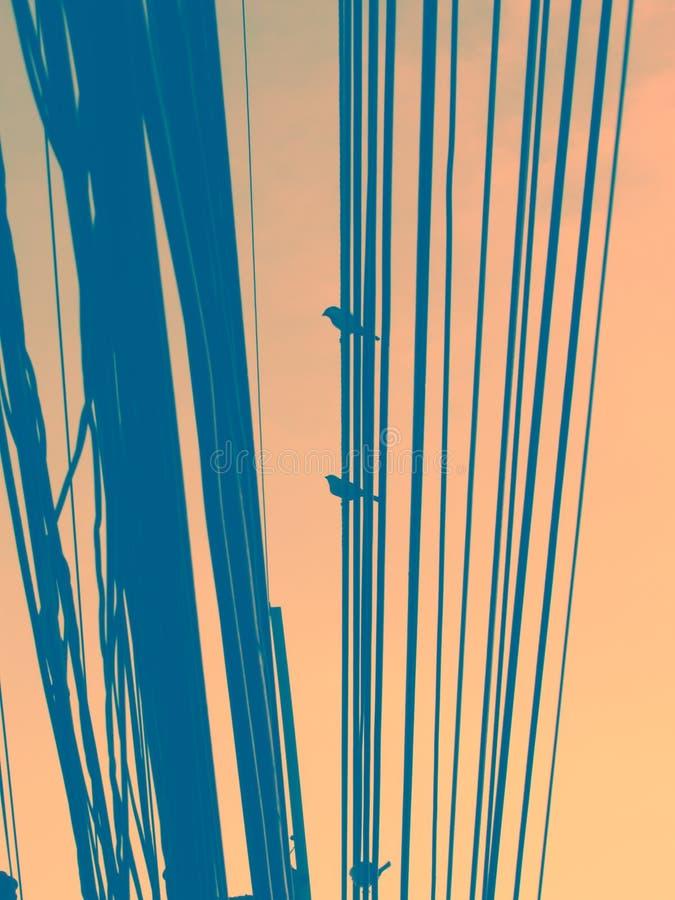 Silhouet die van vogels zich op draden tegen de hemel bevinden dramatisch royalty-vrije stock fotografie
