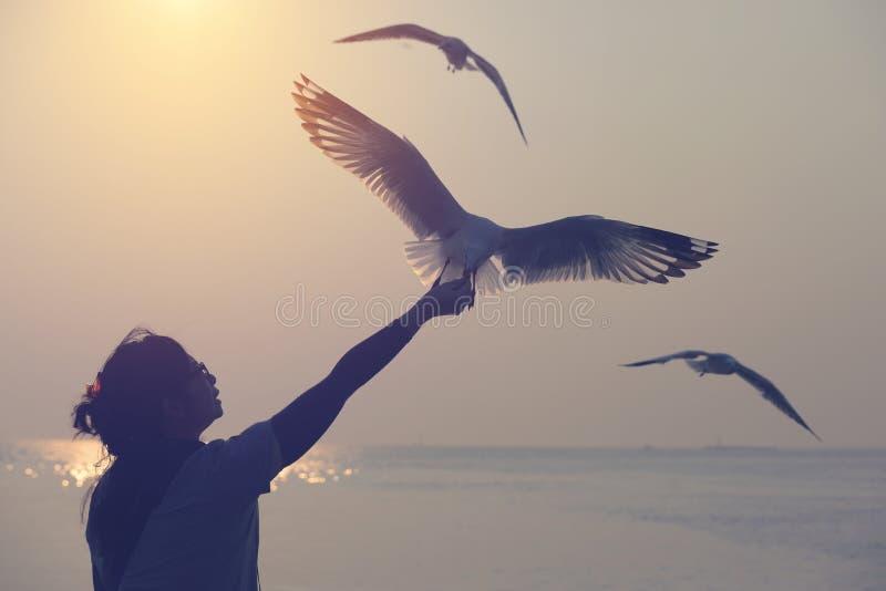 Silhouet die van zeemeeuw en eet voedsel van wohan hand het vliegen royalty-vrije stock afbeelding