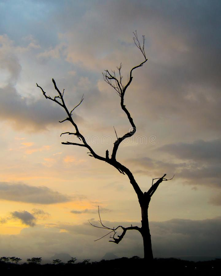 Silhouet eenzame boom onder de avondhemel stock foto
