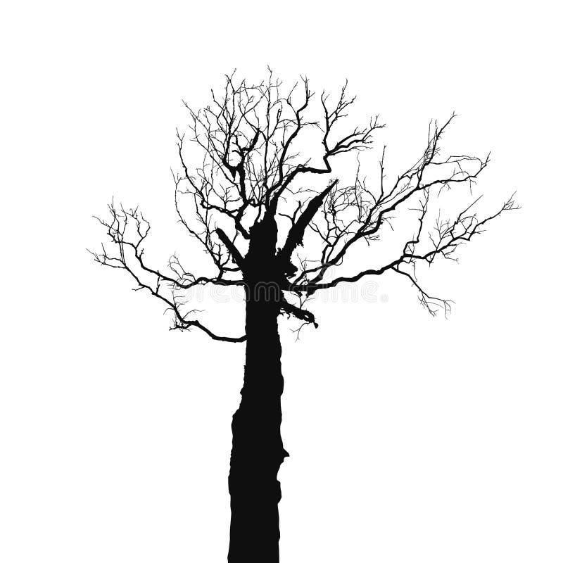 Silhouet oude droge boom stock illustratie