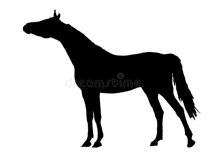 Silhouet van Arabisch paard royalty-vrije illustratie