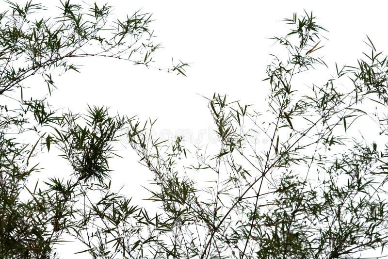 Silhouet van bamboe royalty-vrije stock foto's