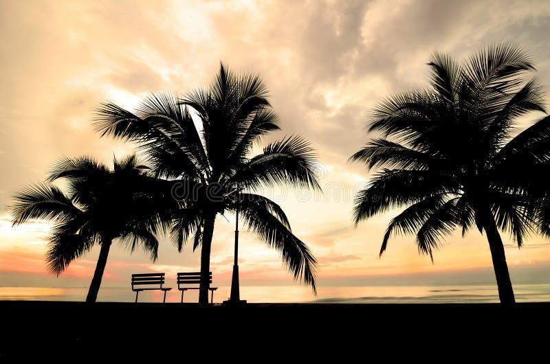 Silhouet van bank en kokospalm stock foto