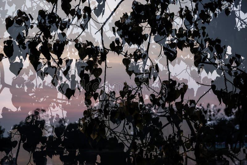 Silhouet van Bladeren van fig. van BO Treesacred, Ficusreligiosa op rivierachtergrond die wordt toegevoegd royalty-vrije stock foto