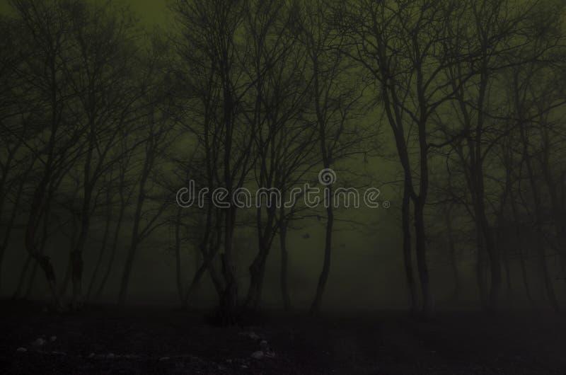 Silhouet van bomen bij nacht, Griezelig mistig bos Eng verschrikkingsconcept stock afbeelding