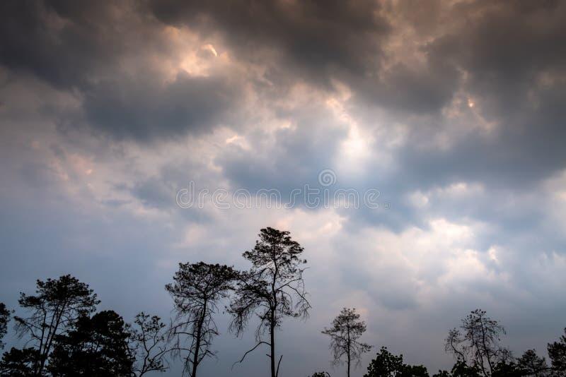 Silhouet van bomen tegen bewolkte hemel op een donkere dag royalty-vrije stock fotografie