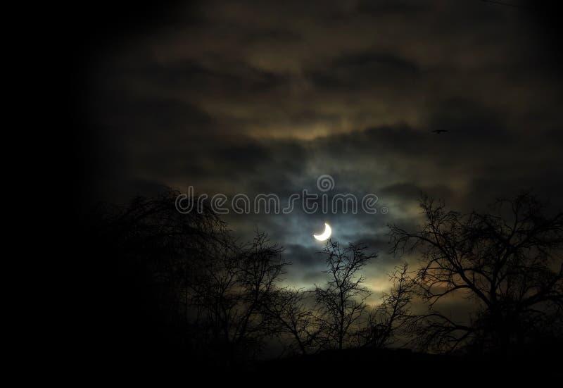 Silhouet van bomen tegen de halve maan bij nacht stock foto's