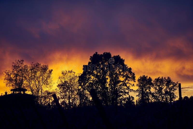 Silhouet van bomen tegen verbazende zonsonderganghemel royalty-vrije stock afbeeldingen
