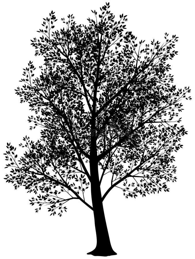 Silhouet van boom royalty-vrije illustratie