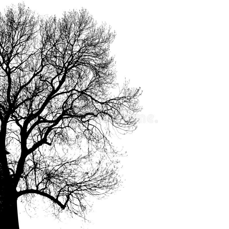 Silhouet van boom vector illustratie