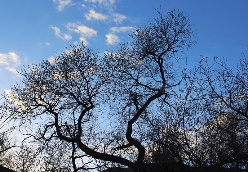 Silhouet van boom onder blauwe hemel stock foto's