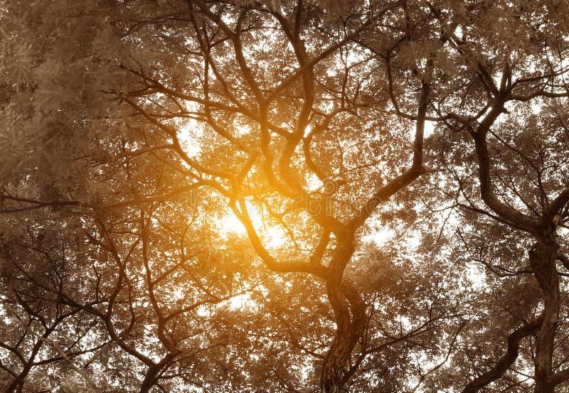 Silhouet van boomtakken in de tuin met door van zonlicht Zwart-witte toon royalty-vrije stock fotografie