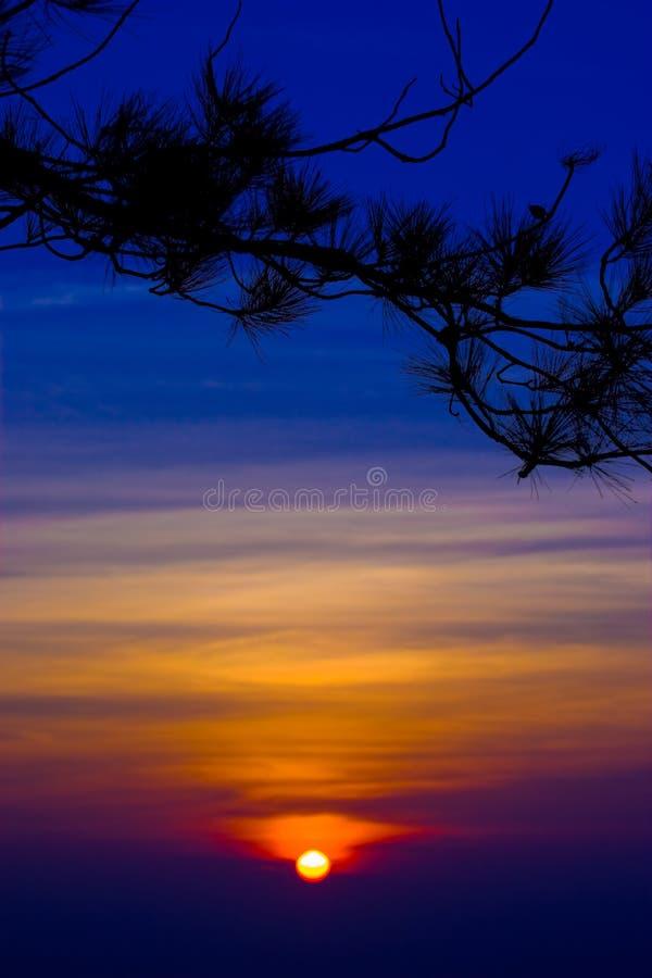 Silhouet van boomtakken met zonsonderganghemel royalty-vrije stock afbeeldingen