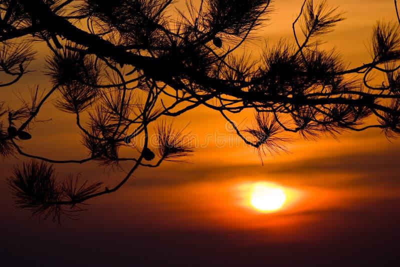 Silhouet van boomtakken met zonsonderganghemel stock afbeeldingen