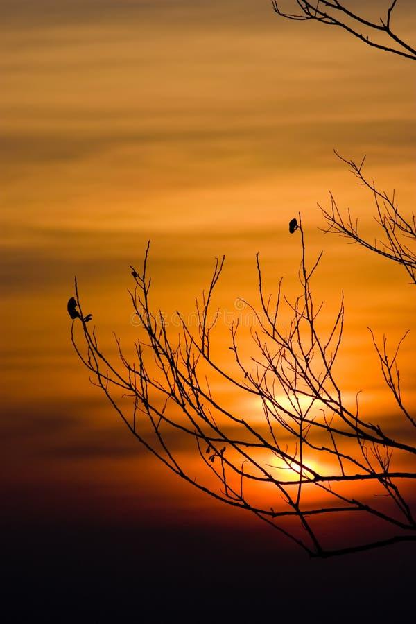 Silhouet van boomtakken met zonsonderganghemel royalty-vrije stock afbeelding