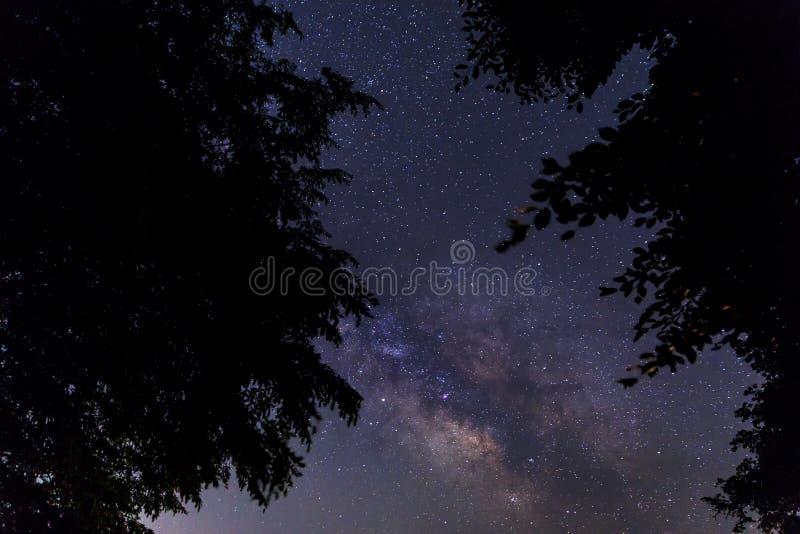 Silhouet van boomtakken tegen de achtergrond van melkachtig stock foto