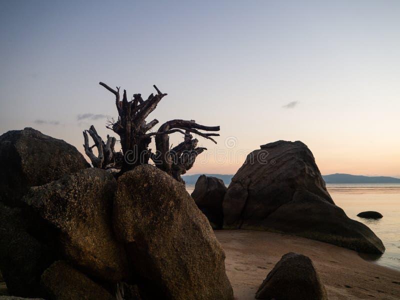 Silhouet van boomwortels op het strand bij zonsondergang royalty-vrije stock fotografie