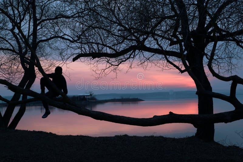 Silhouet van de jongenszitting op een boomtak royalty-vrije stock foto's