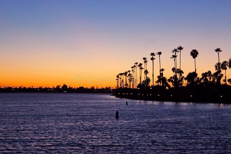 Silhouet van de Palmen van Californië royalty-vrije stock afbeelding