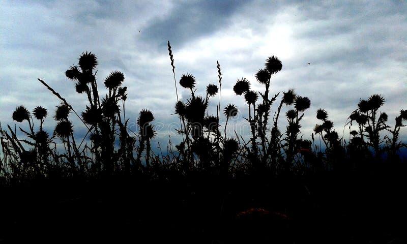 Silhouet van distels tegen een stormachtige hemel, Engeland stock foto's