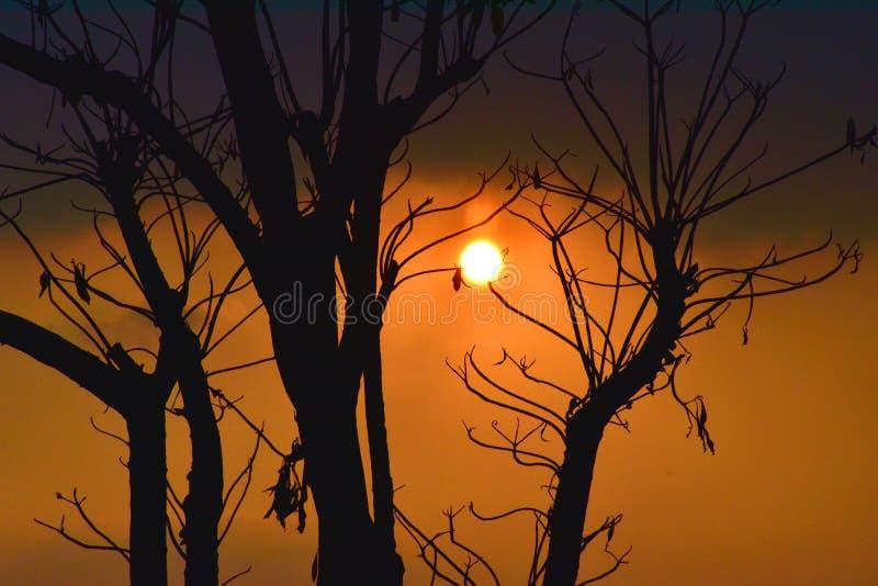 Silhouet van dode boom stock foto