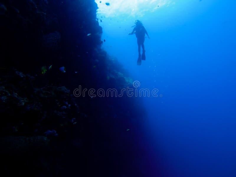 Silhouet van duiker bij een muur met vissen en koralen stock afbeelding