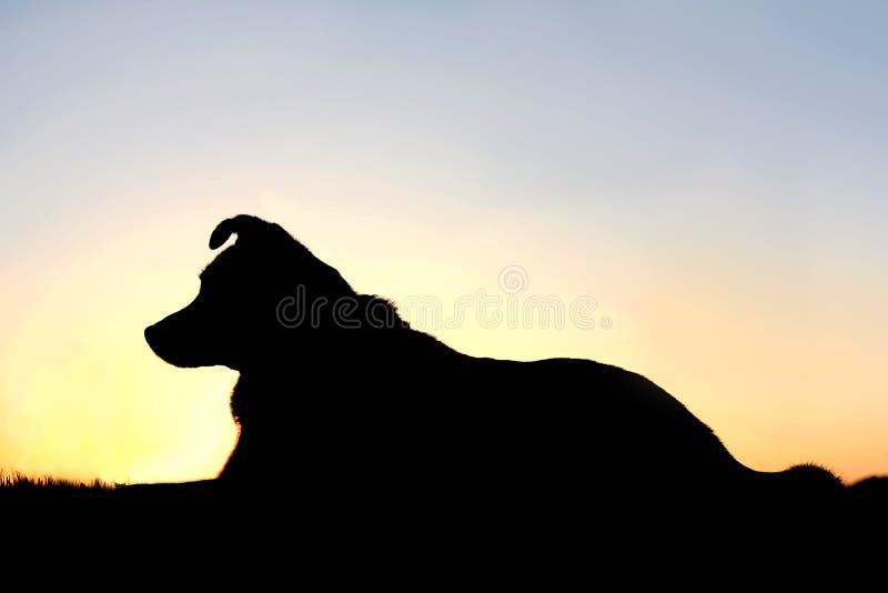 Silhouet van Duitse herder Mix Dog bij Zonsondergang royalty-vrije stock foto