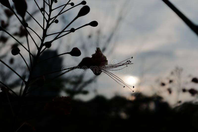 Silhouet van een bloem royalty-vrije stock foto's