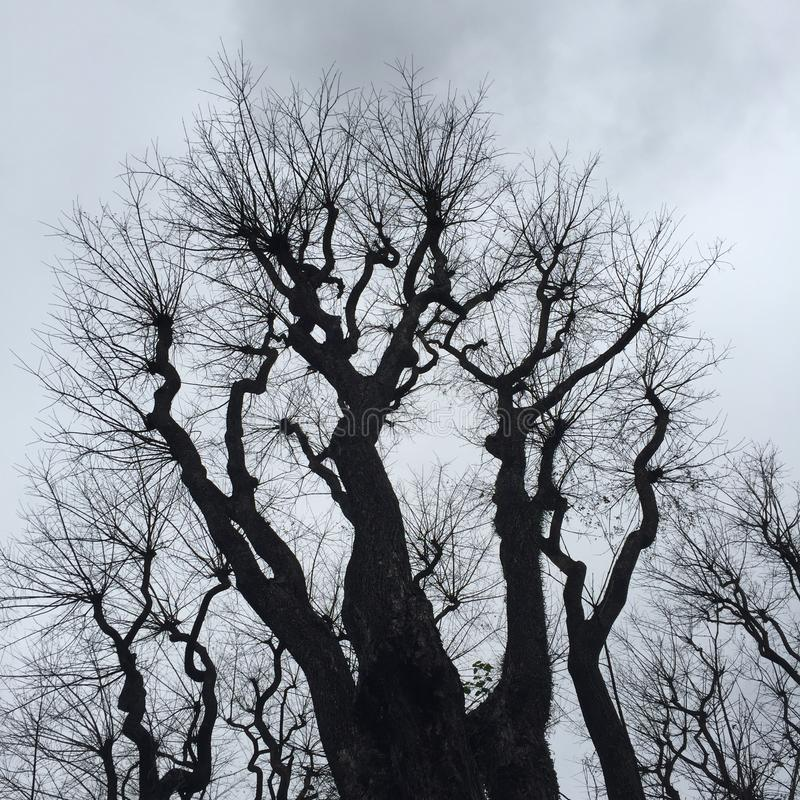 Silhouet van een boom royalty-vrije stock fotografie