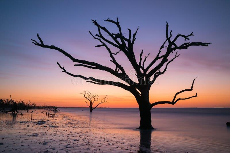 Silhouet van een boom in de oceaan stock foto's