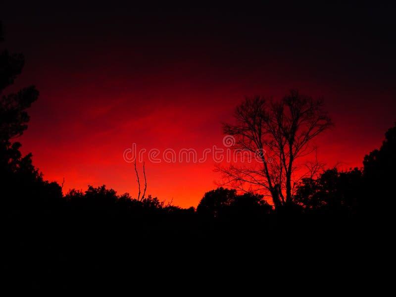 Silhouet van een boom en een rode hemel royalty-vrije stock afbeeldingen