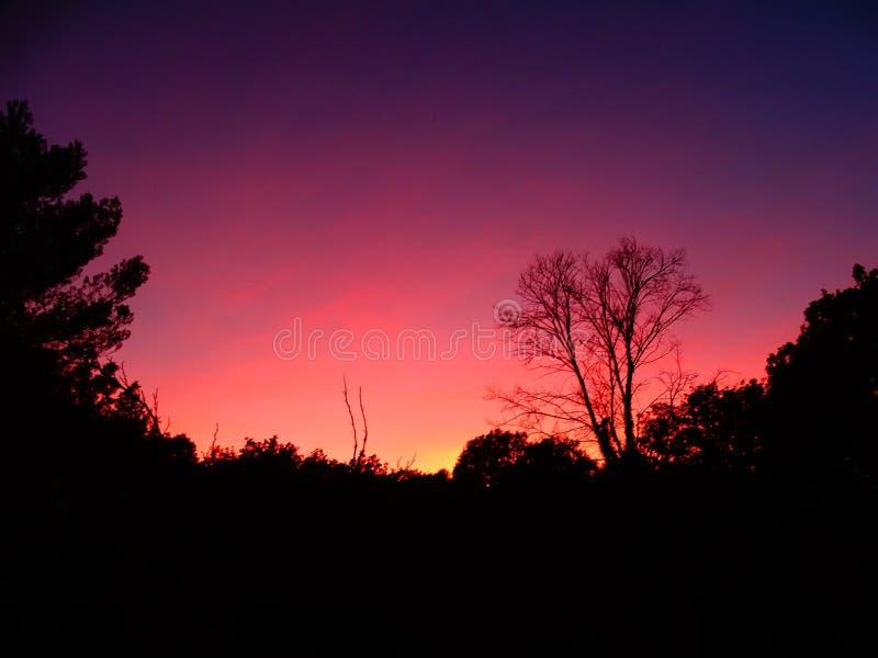 Silhouet van een boom en een roze en blauwe hemel stock afbeeldingen