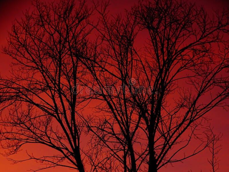 Silhouet van een boom en een rozerode hemel stock afbeeldingen