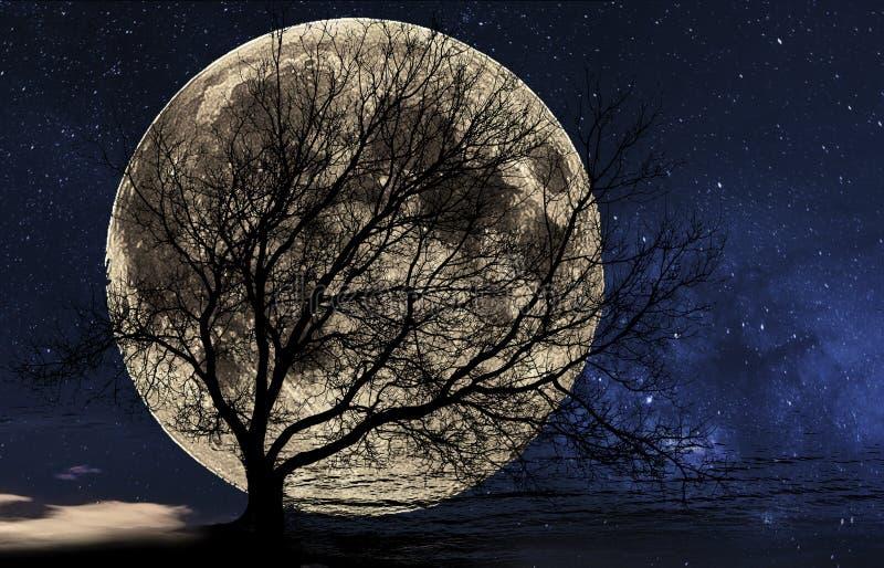 Silhouet van een boom tegen de grote maan royalty-vrije stock fotografie