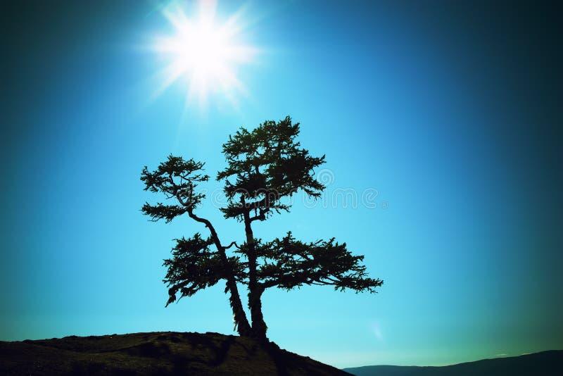 Silhouet van een boom tegen de zon stock foto