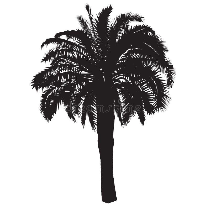 Silhouet van een datumpalm met vruchten stock foto