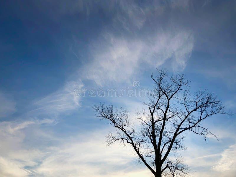 Silhouet van een eenzame boom tegen mooie blauwe hemel met witte wolken royalty-vrije stock fotografie
