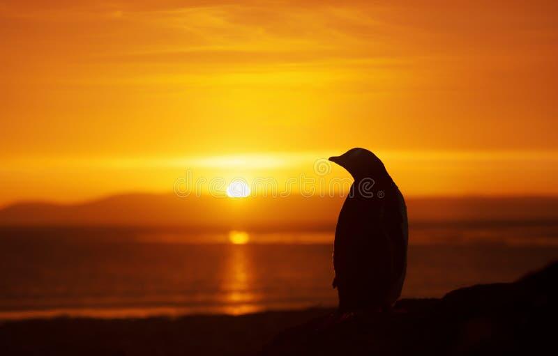 Silhouet van een gentoopinguïn die zich op een zandig strand bij zonsondergang bevinden stock afbeelding