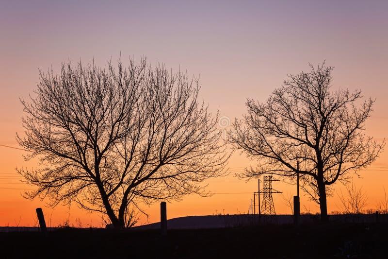 Silhouet van een grote eik tegen zonsondergang royalty-vrije stock foto
