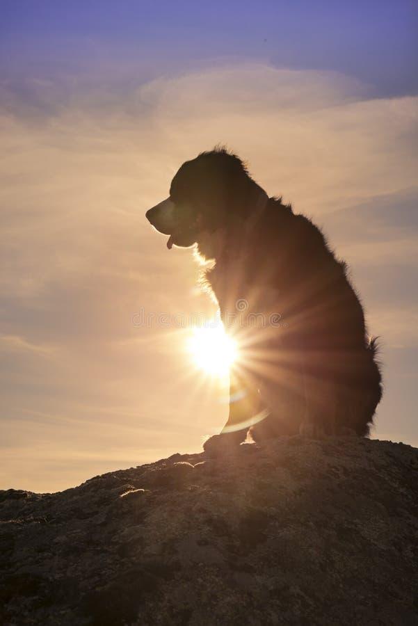 Silhouet van een hond bovenop de rots onderzoekend afstand royalty-vrije stock afbeeldingen