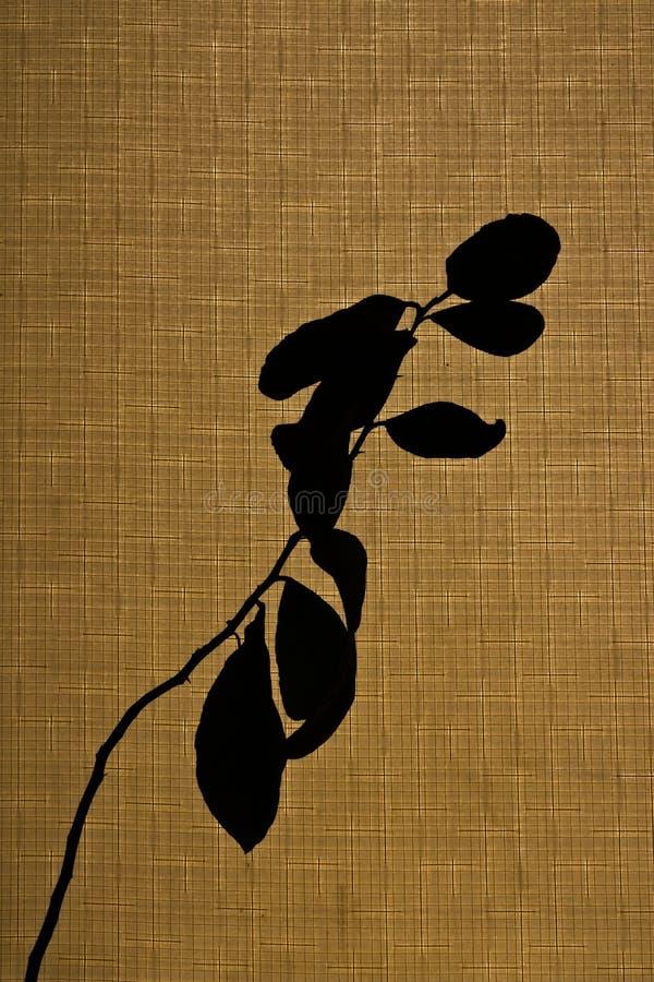 Silhouet van een jonge plant op een beige achtergrond stock afbeeldingen