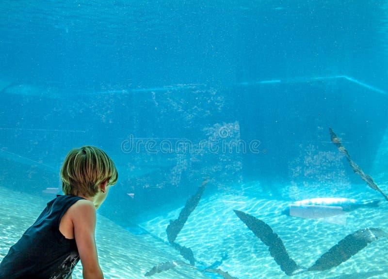 Silhouet van een jongen die aeal in het aquarium bekijken royalty-vrije stock foto
