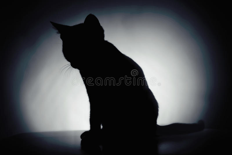 Silhouet van een katje stock foto