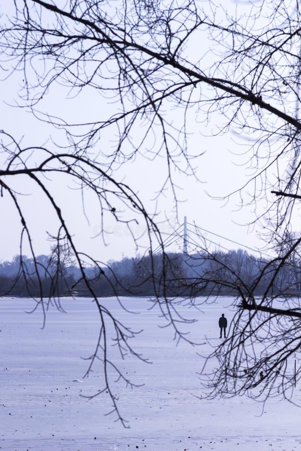 Silhouet van een mens op een sneeuwgebied, takken van bomen in de voorgrond royalty-vrije stock foto's