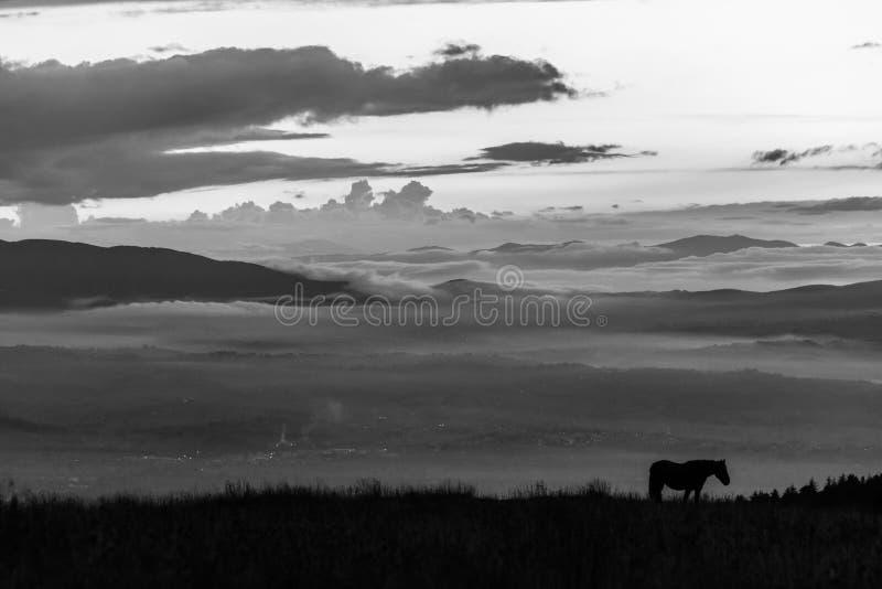 Silhouet van een paard op een berg bij schemer, met een overzees van mist i stock fotografie