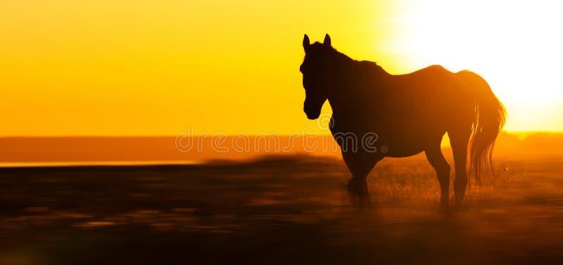 Silhouet van een paard op het gebied bij zonsondergang, panorama royalty-vrije stock foto's