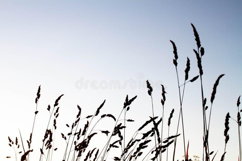 Silhouet van een tarwelandbouwbedrijf royalty-vrije stock afbeelding