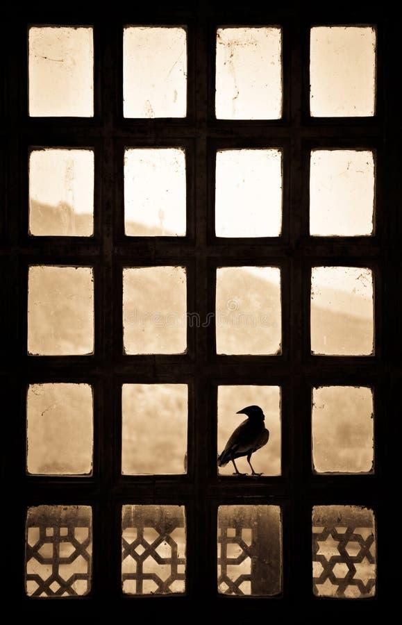 Silhouet van een vogelzitting op een patternlikevenster in India stock foto's