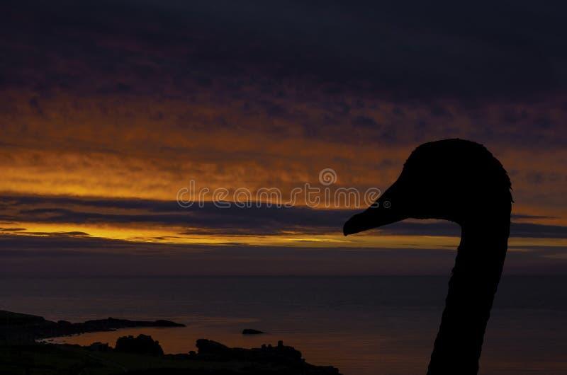 Silhouet van een zwaan met zonsondergang over de oceaan op achtergrond - St Ives royalty-vrije stock afbeelding