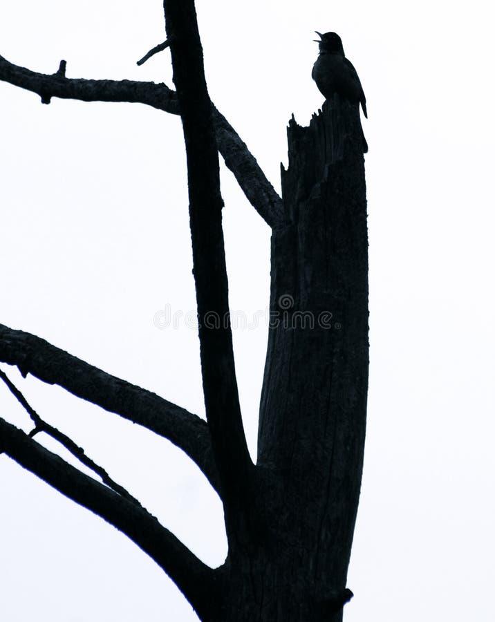 Silhouet van een zwarte vogel stock foto's